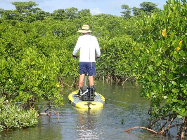 安定感抜群のサッピーでマングローブを大冒険写真07